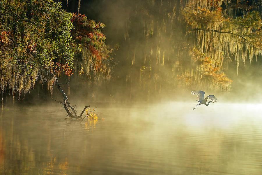 Caddo Photograph - Egret by Hua Zhu