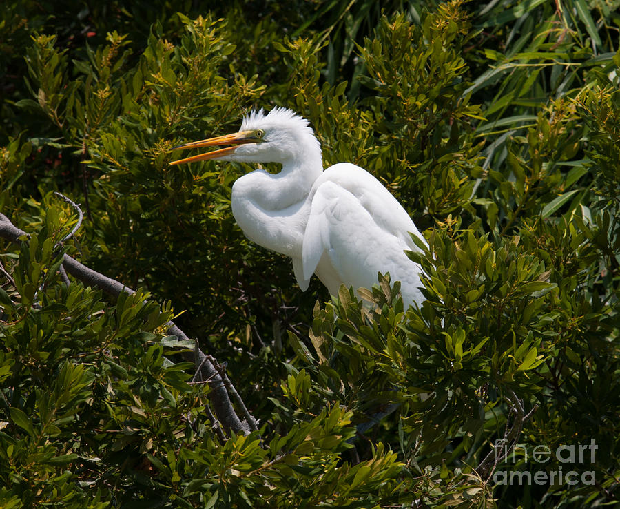 Egret In Bushes Photograph