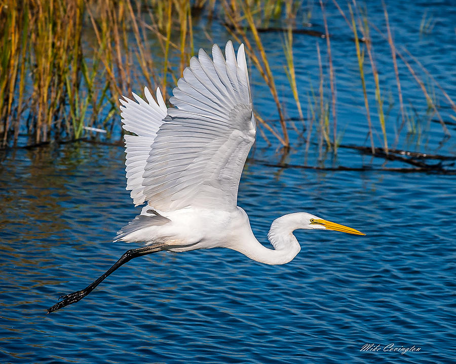 Egret in Motion by Mike Covington