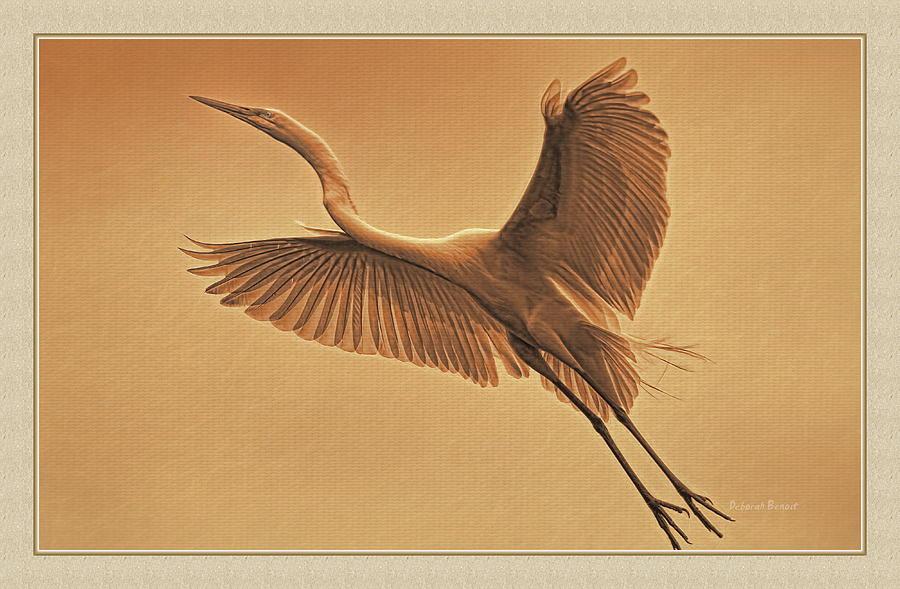 Egret Photograph - Egret Sepia by Deborah Benoit
