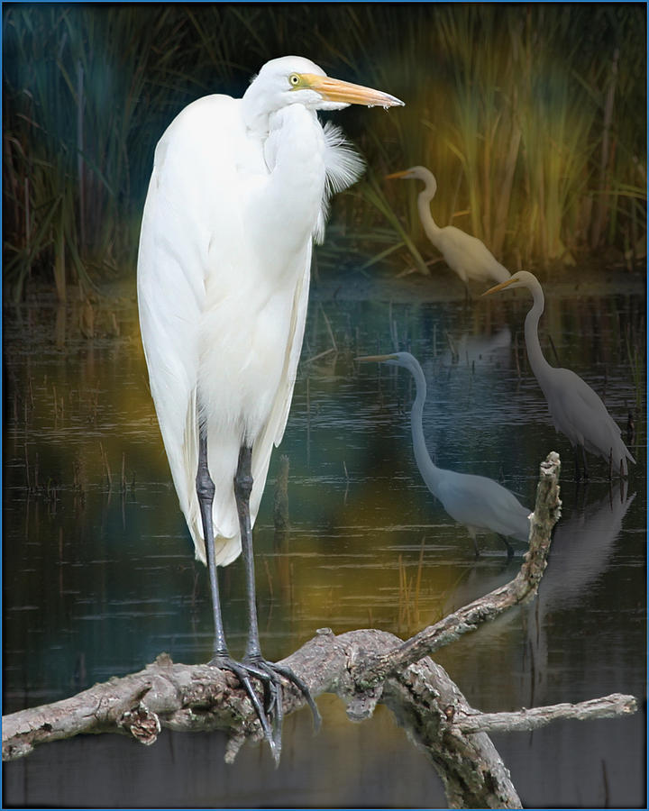 Bird Photograph - Egrets by John Kunze