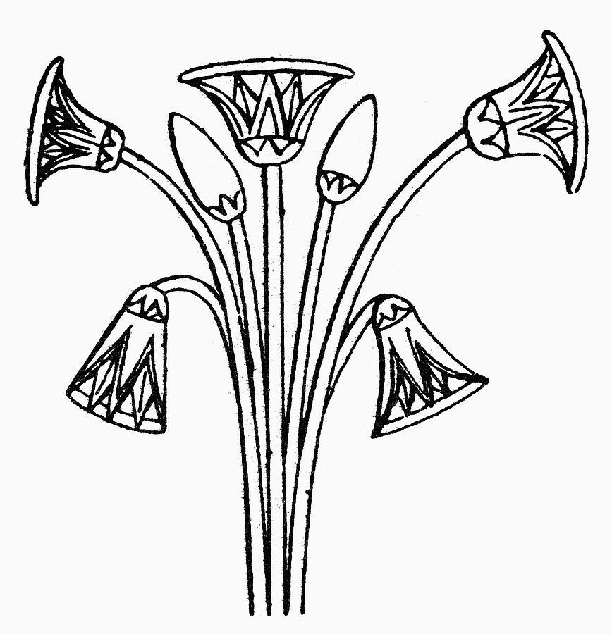 Egyptian Symbol Lotus Drawing By Granger