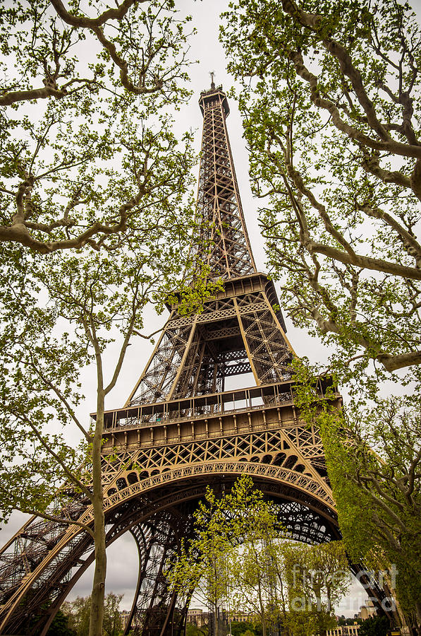 Architecture Photograph - Eiffel Tower by Carlos Caetano