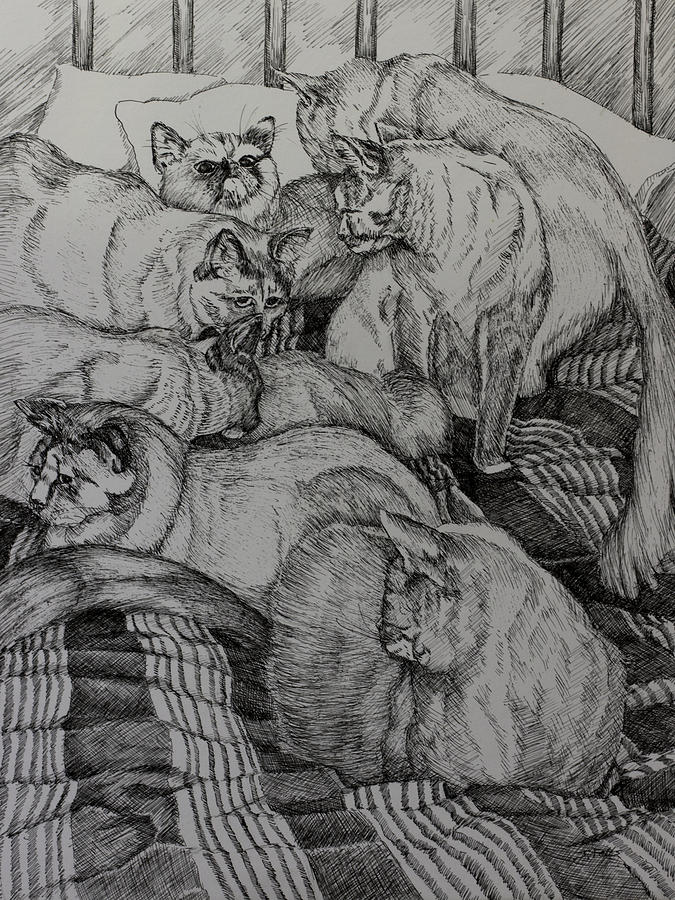 Cats Drawing - Eight Is Enough by Janet Felts