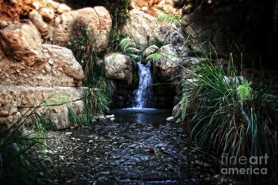 Jerusalem Painting - Ein Gedi Springs by Doc Braham