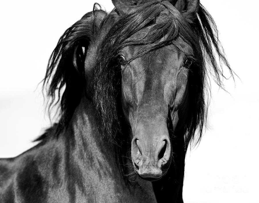 Spanish Horse Photograph - El Caballo Negro by Carol Walker