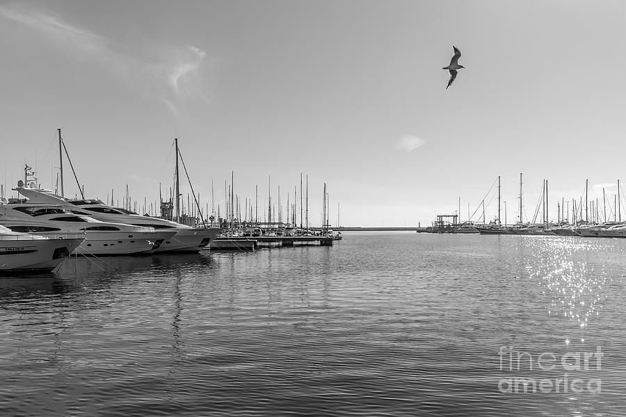 Port Photograph - El Puerto by Eugenio Moya