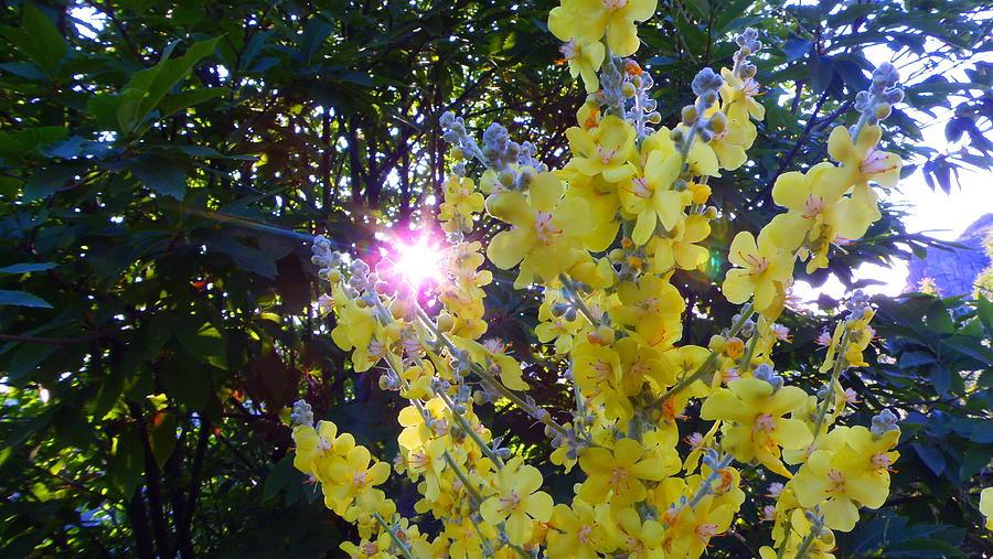 Photograph - El Sol Entre Flores by Nando Montes