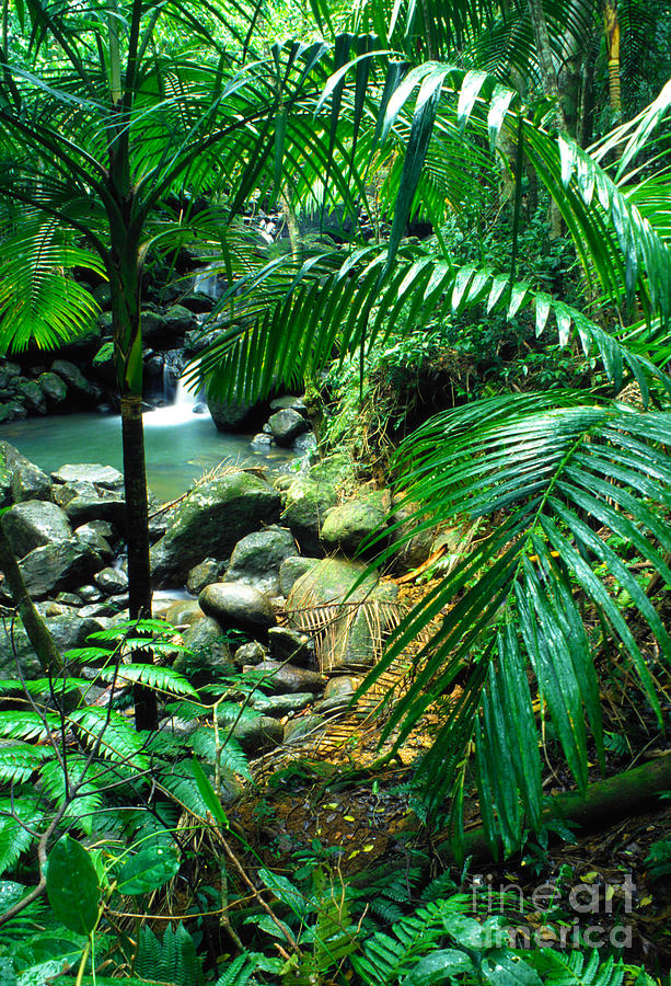 Puerto Rico Photograph - El Yunque Palm Trees And Waterfall by Thomas R Fletcher