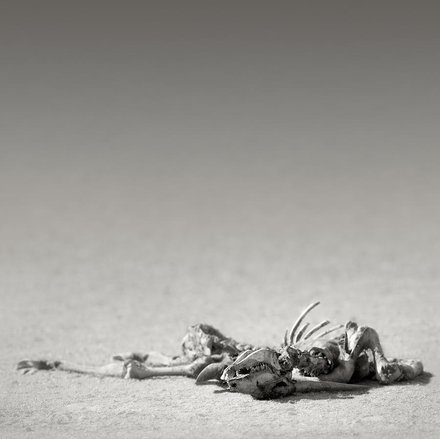 Eland Skeleton In Desert Photograph by Johan Swanepoel