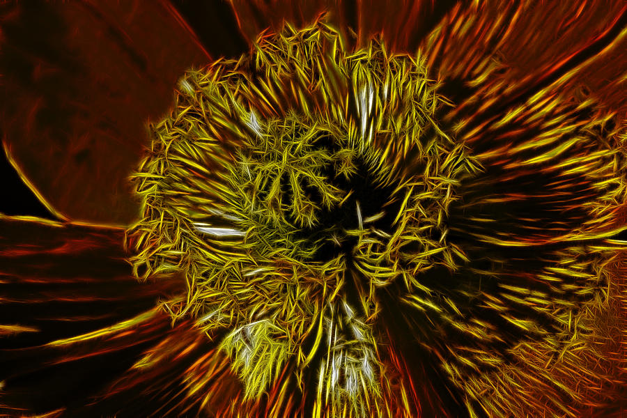 Poppy Digital Art - Electric Poppy by Photographic Art by Russel Ray Photos