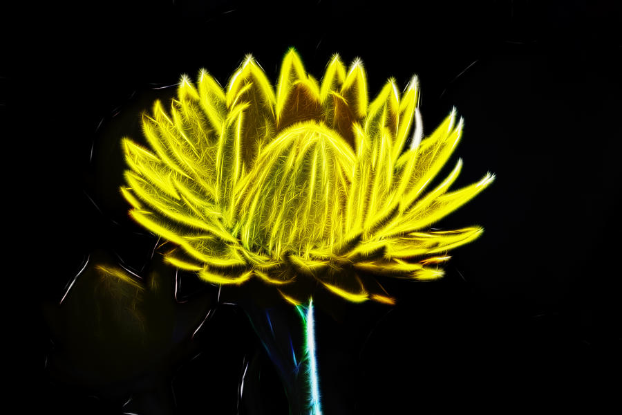 Flower Digital Art - Electric Yellow by Photographic Art by Russel Ray Photos