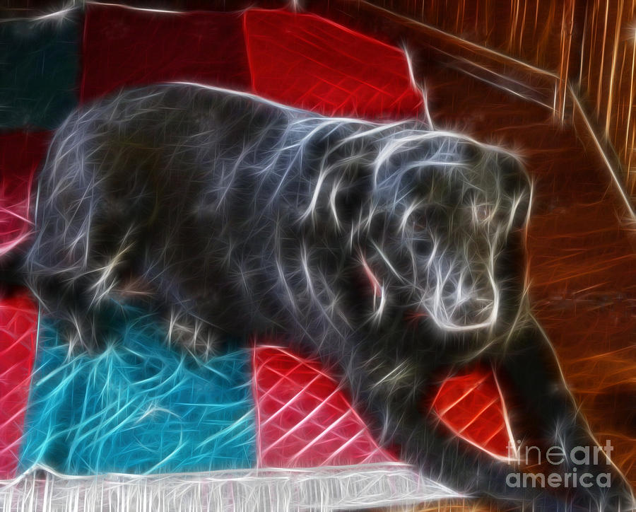 Black Dog Photograph - Electrostatic Dog And Blanket by Barbara Griffin