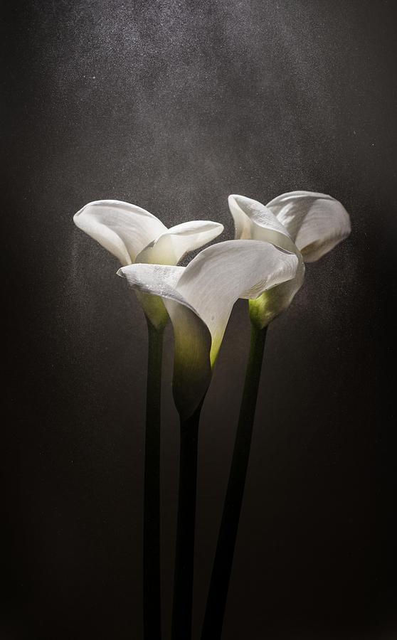 Natural Photograph - Elegance by Ivan Vukelic