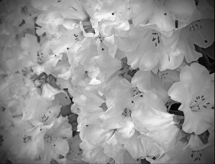 Elegant Soft White Flowers Photograph by Tina Wentworth