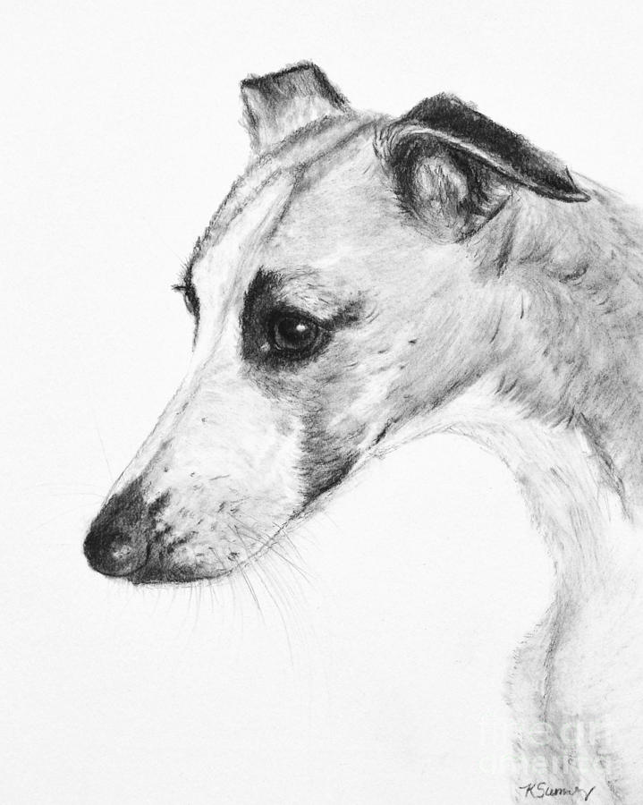 Whippet Painting - Elegant Whippet by Kate Sumners