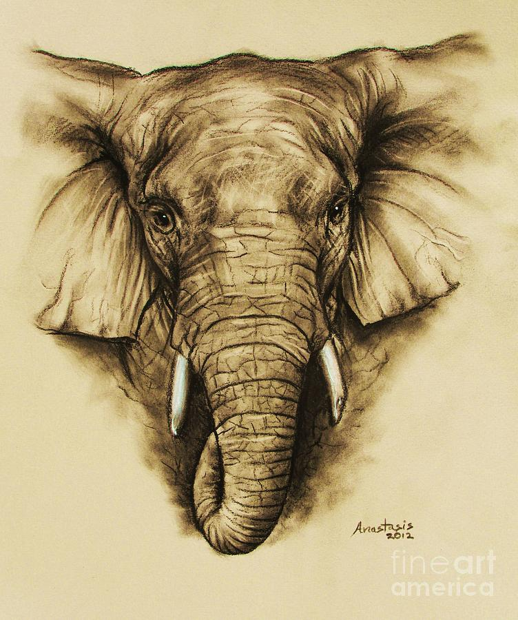 Elephant Drawing - Elephant 2 by Anastasis  Anastasi