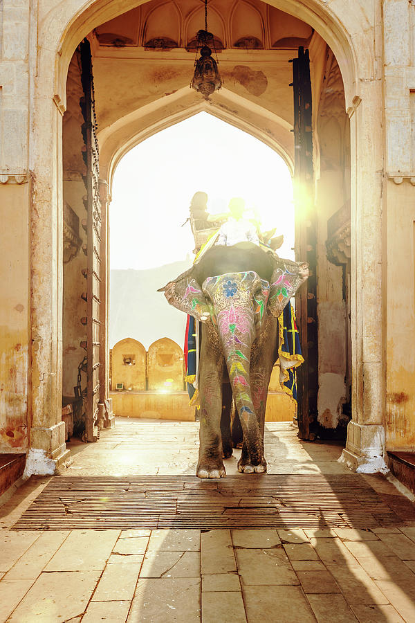 Elephant At Amber Palace Jaipur,india Photograph by Mlenny
