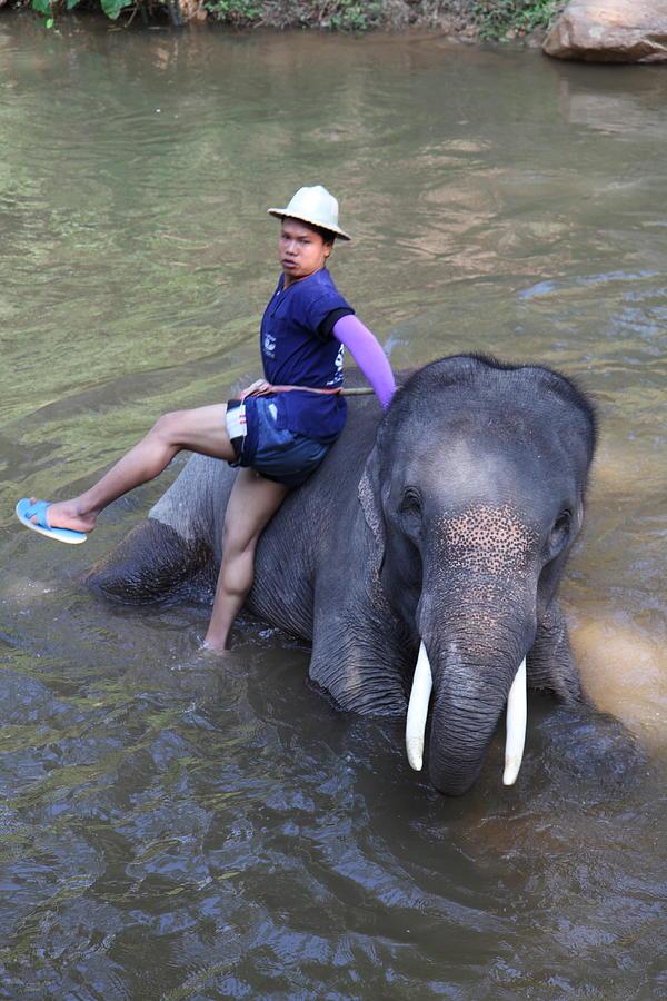 Chiang Photograph - Elephant Baths - Maesa Elephant Camp - Chiang Mai Thailand - 011316 by DC Photographer