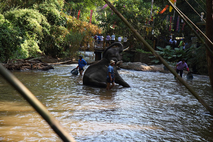 Chiang Photograph - Elephant Baths - Maesa Elephant Camp - Chiang Mai Thailand - 01139 by DC Photographer
