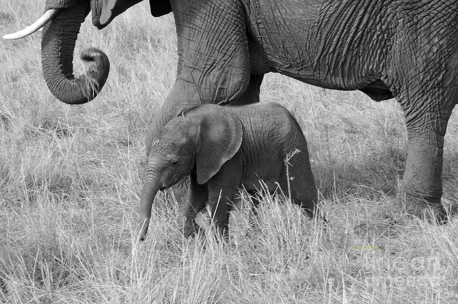 Elephant Child BW by Sue Jarrett
