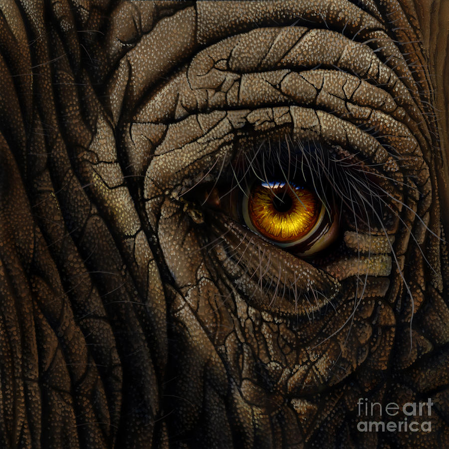 Elephant Eye Painting By Jurek Zamoyski