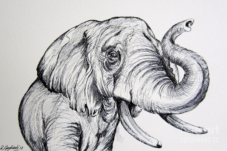 Wild life painting elephant in black and white by roberto gagliardi