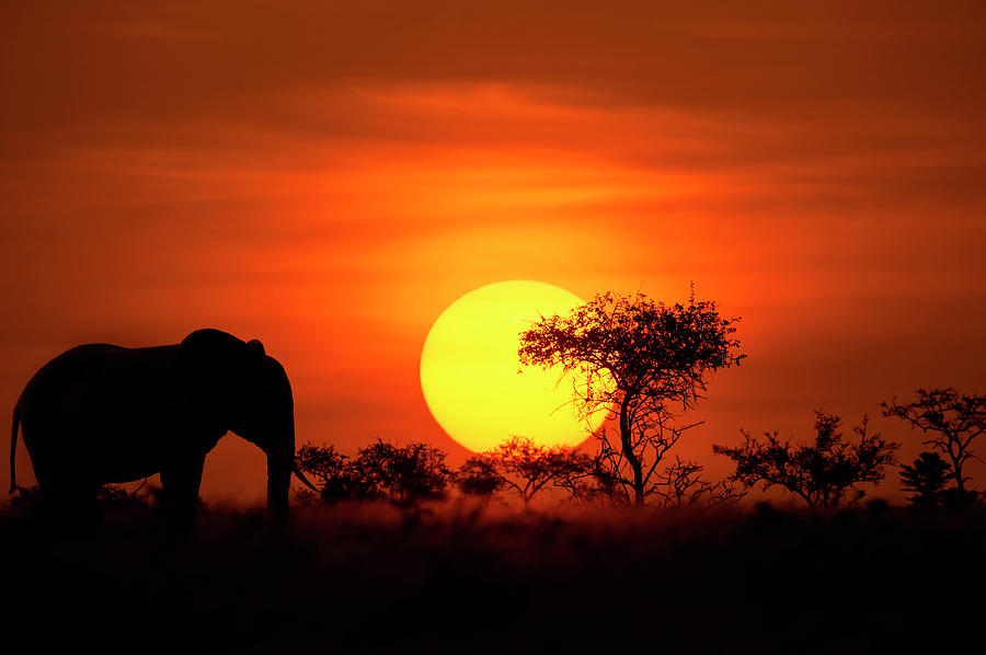 Elephant In Front Of A Perfect African Photograph by Guenterguni