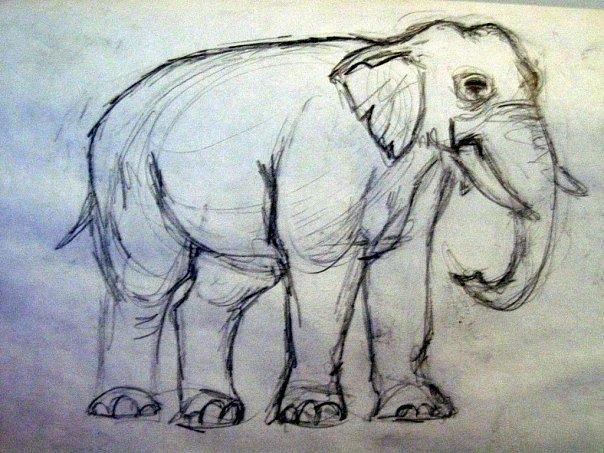 Elephant Drawing by Lauren  Pecor