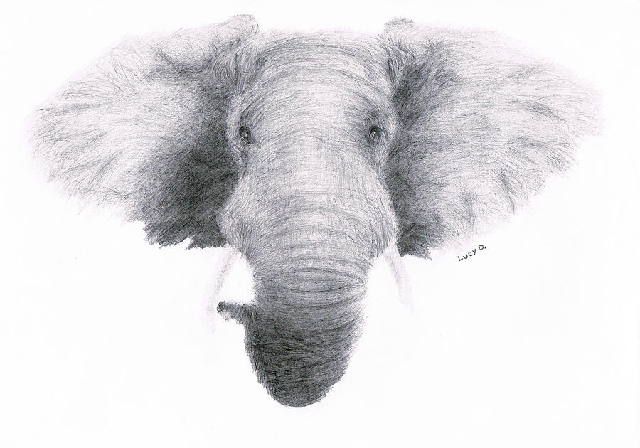 Elephant Drawing - Elephant by Lucy D