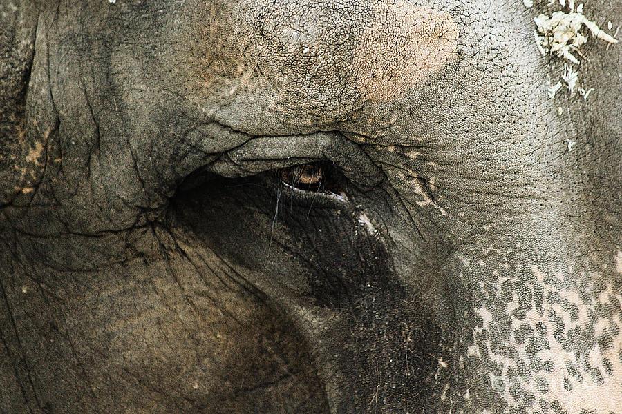Animal Photograph - Elephant by Melissa Petrey