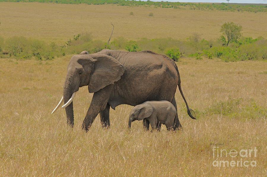 Elephant Mom and Child 2 by Sue Jarrett