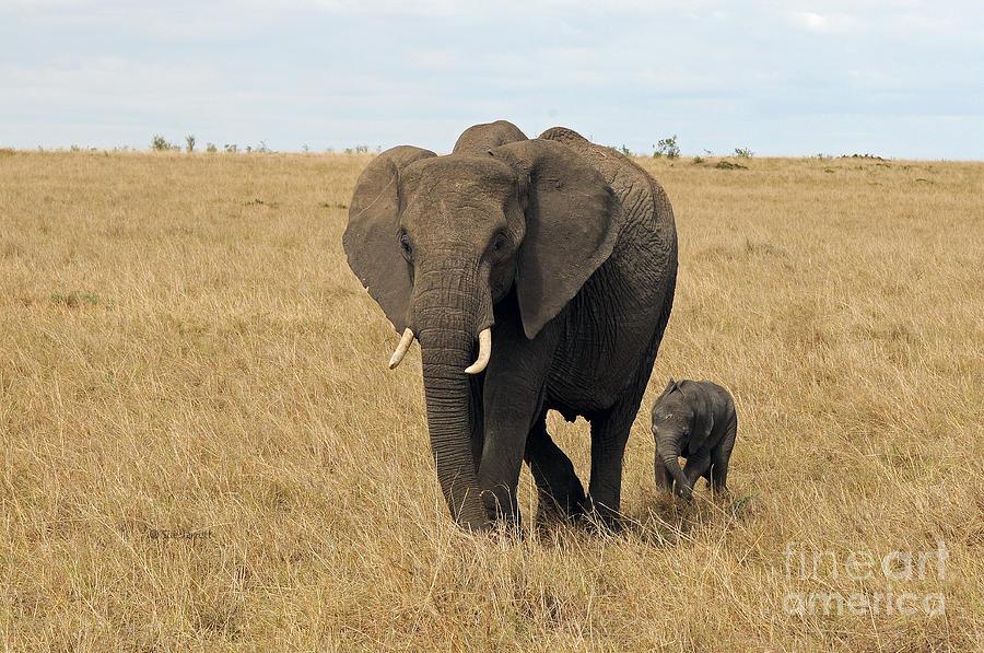 Elephant Mom and Child 3 by Sue Jarrett