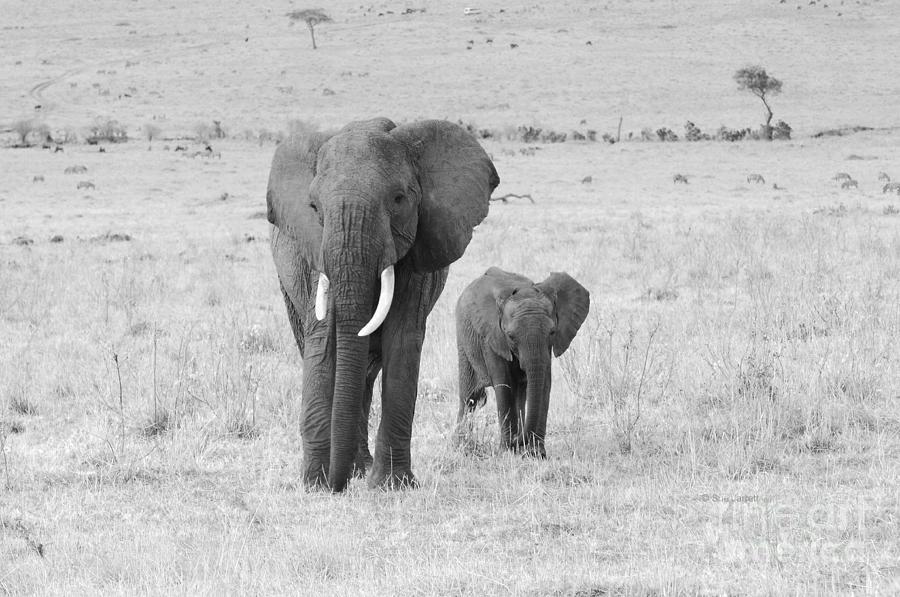Elephant Mom and Child by Sue Jarrett