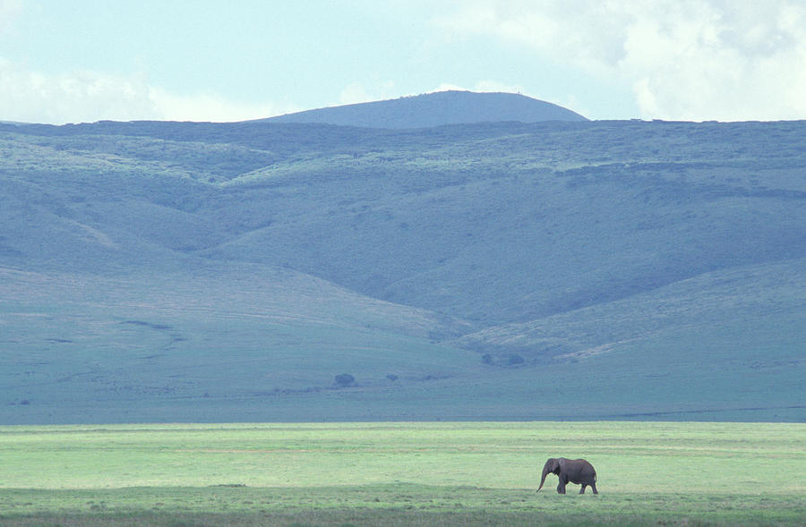 Africa Photograph - Elephant On Plains by Chris Pinchbeck