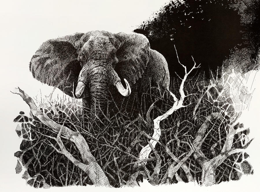 Elephant Drawing - Elephant by Paul Illian