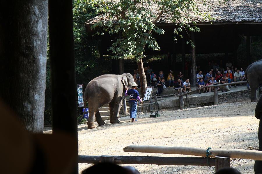 Chiang Photograph - Elephant Show - Maesa Elephant Camp - Chiang Mai Thailand - 011342 by DC Photographer