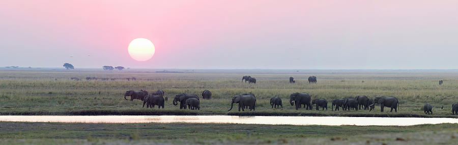 Elephants At Chobe Game Reserve Photograph by Hphimagelibrary