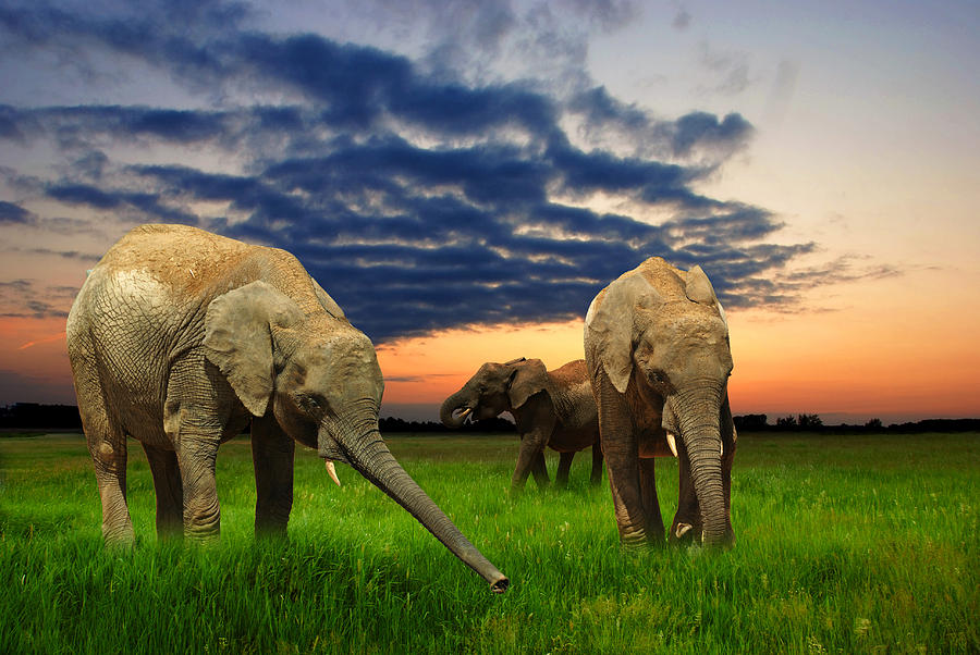 Africa Photograph - Elephants At Sunset by Jaroslaw Grudzinski