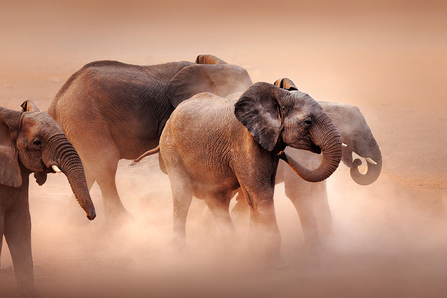 Wild Photograph - Elephants In Dust by Johan Swanepoel