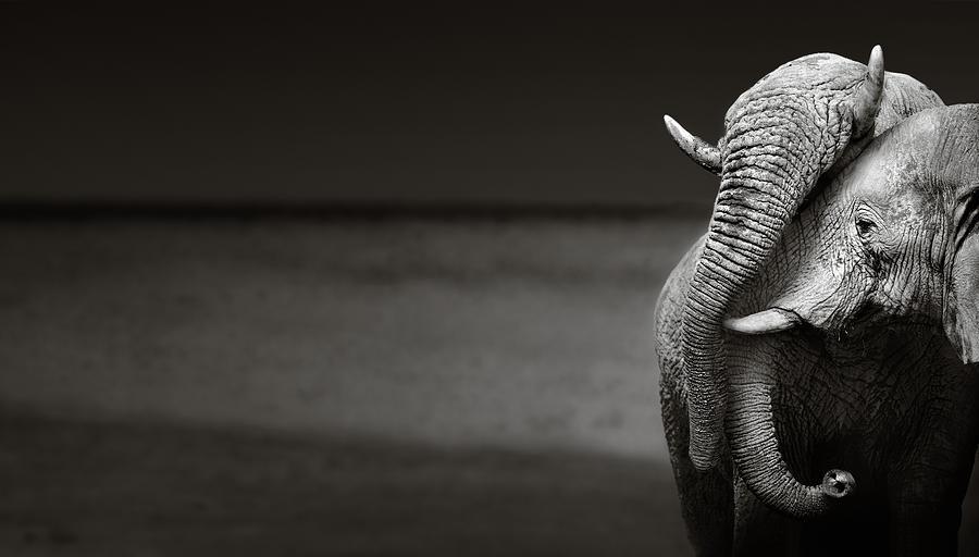 Elephants Interacting Photograph by Johan Swanepoel