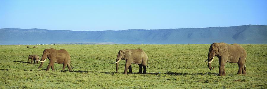 Horizontal Photograph - Elephants Ngorongoro Crater Tanzania by Animal Images