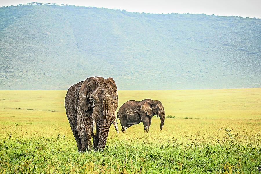 Elephants Photograph by Photo By Diane J Geddes, Winnipeg, Canada