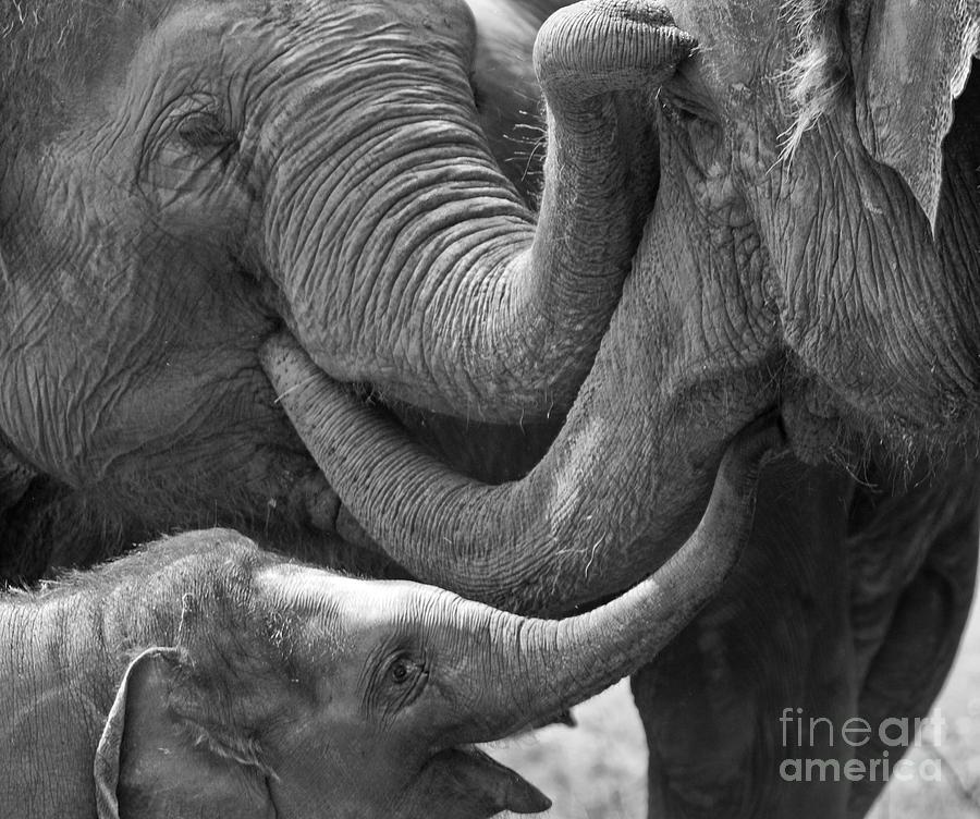 Elephants Tender Touch by Bel Menpes