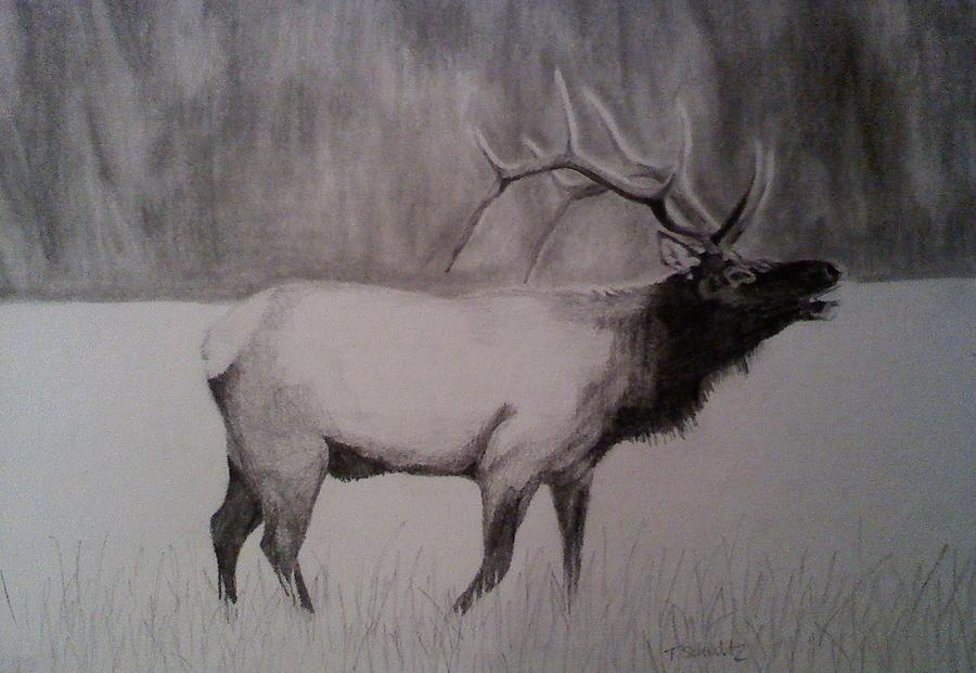 Elk Bugling Drawing by Tabitha Schultz