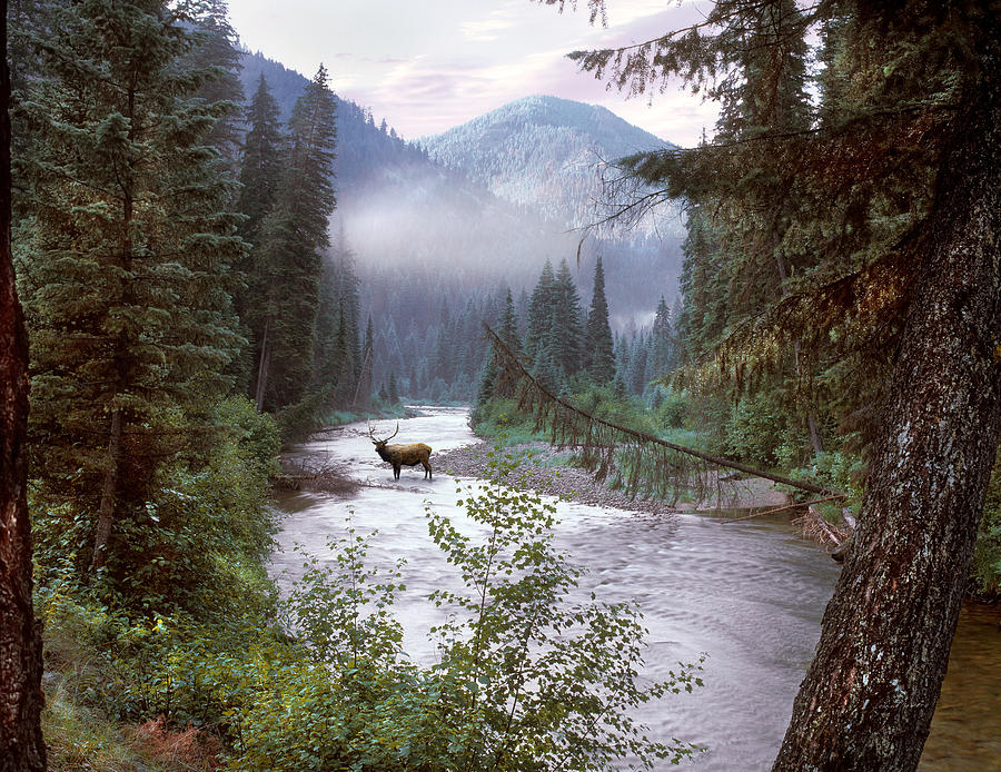 Idaho Photograph - Elk Crossing 2 by Leland D Howard