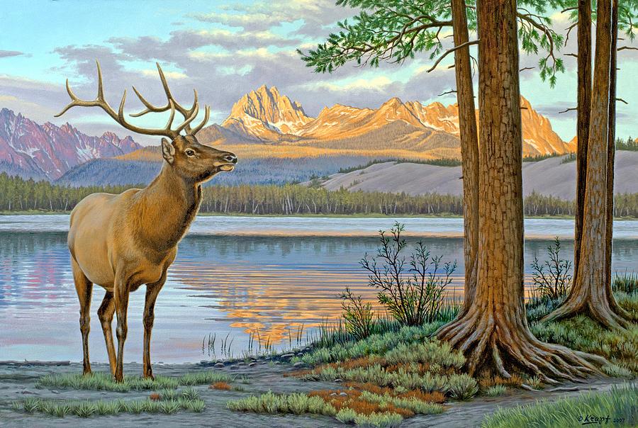 Wildlife Painting - Elk In The Sawtooths by Paul Krapf