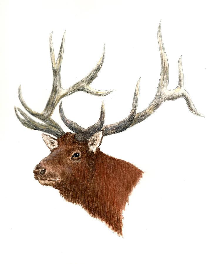 Elk - Male Painting