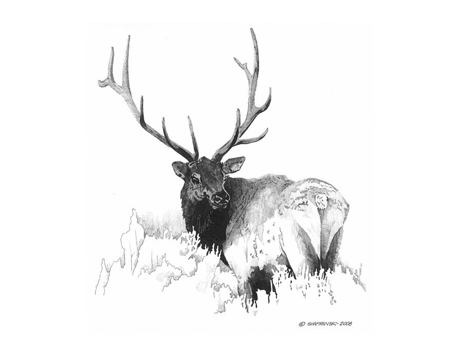 Pen and ink drawing elk by paul shafranski