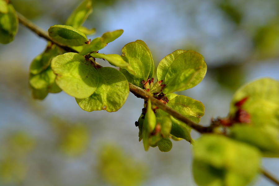 Landscape Photograph - Elm Entary My Dear by Amber Whiting Bradley